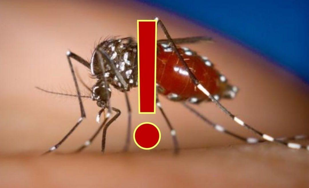 ¿Es tan peligroso el mosquito tigre como parece? – Claves sobre el mosquito tigre